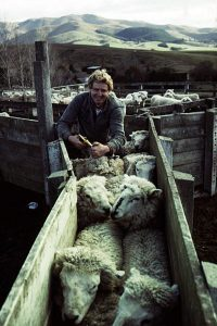 shepherding new zealand